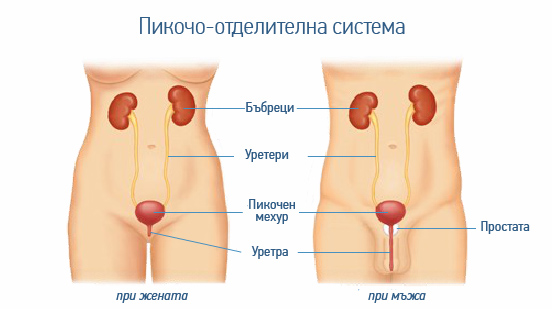hematuria-organi